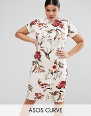 plus size dress asos curve floral